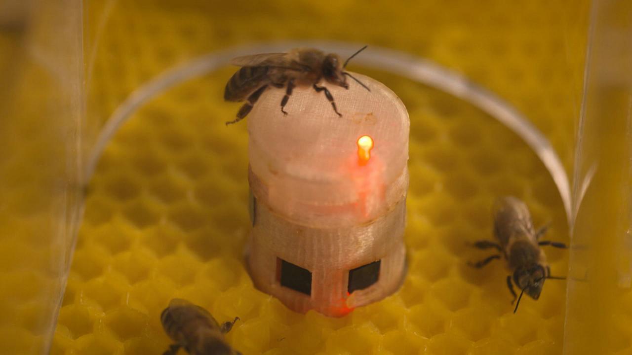 شراكة بين الروبوتات والنحل بهدف تحسين حماية البيئة وفهم أفضل للمجتمعات الحيوانية