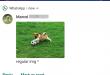 تحديث واتساب يُضيف الدعم لإظهار الصور في إشعارات أندرويد Pie