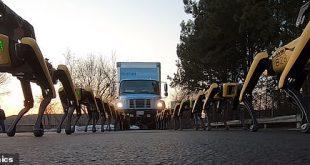 10 روبوتات على شكل كلاب تعمل معًا لسحب شاحنة نقل كبيرة