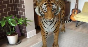 كيفية تسجيل مقاطع الفيديو والتقاط الصور مع حيوانات جوجل الثلاثية الأبعاد